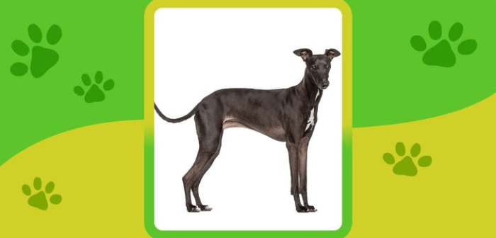 name the dog breed quiz videofacts