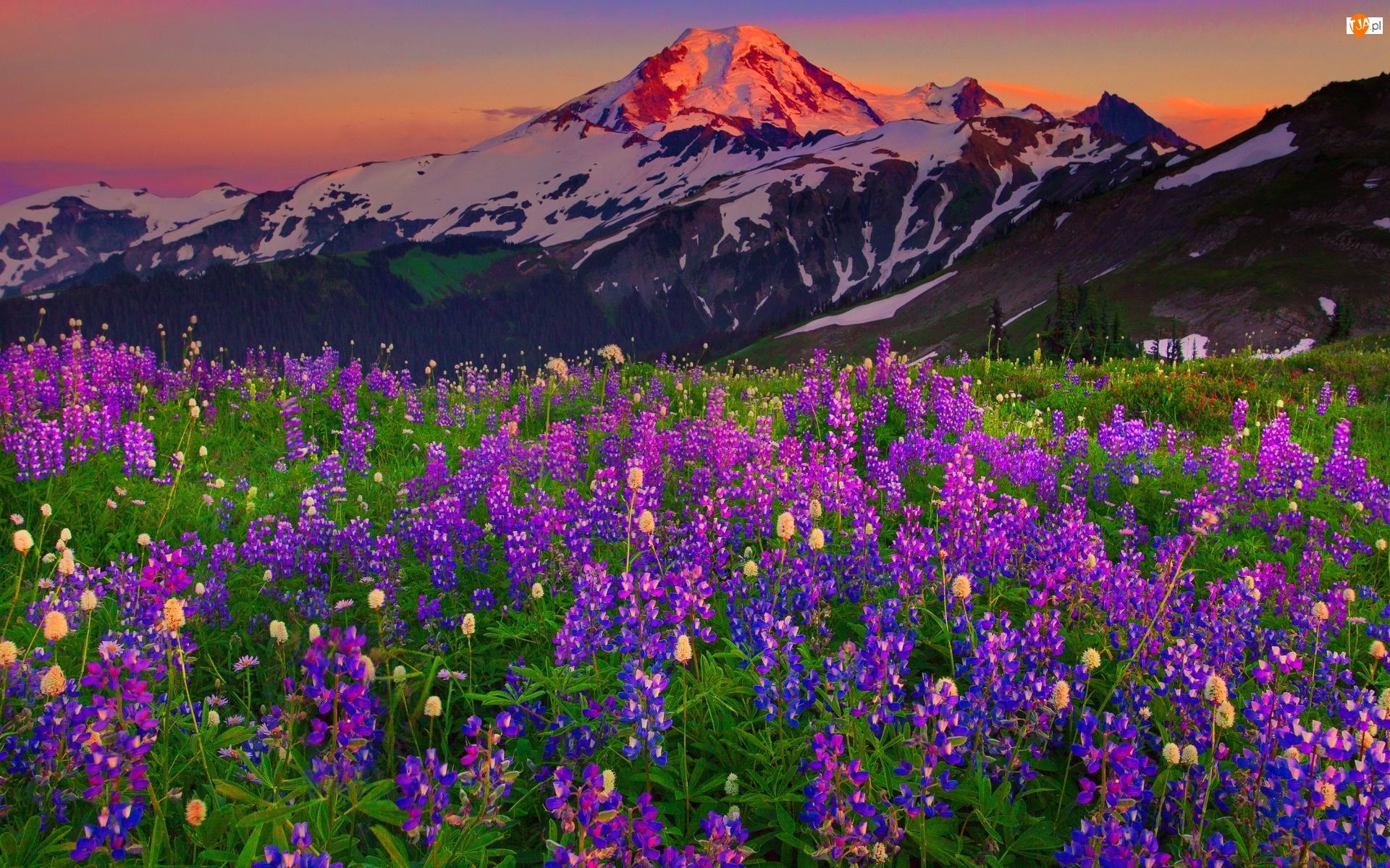 Seattle Washington Fall Skyline Wallpaper G 243 Ry Krajobraz Kwiaty G 243 Rskie