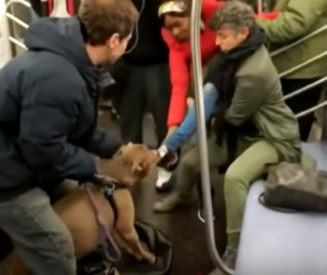 Pit Bull Attacks Woman On Subway – Some Viewers Say She Deserved It