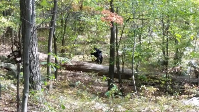 Darsh Patel Chilling Last Photos Capture Bear That Ended Up Killing Him