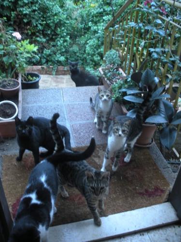 my street cats raphaella bilski
