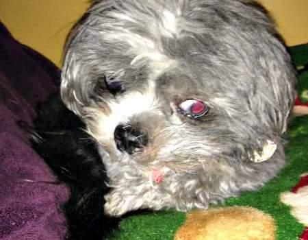 Dante's Rescue Dog Story
