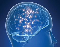 How Chronis Stress Effects the Brain