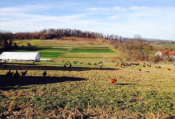 pasture-raised egg shares