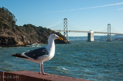 A seagull posed for a photo