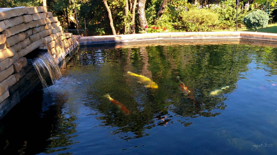 The 6ft Koi pond of my brother-in-law