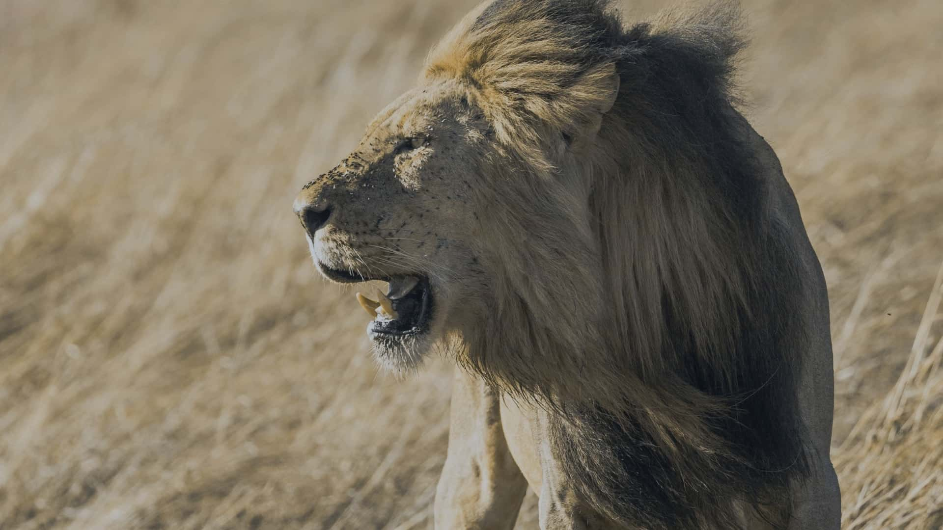 Escaped from being Dinner of Lions in Kruger Park