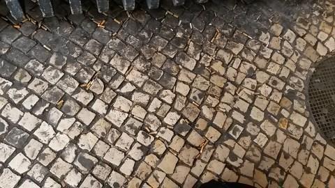 Beatas no Campo Grande, Lisboa