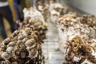 Forest Fungi Farm Shop, Dawlish Warren