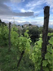 Things To Do On The Amalfi Coast - Le Vigne Di Raito - Vineyard Tour and Supper