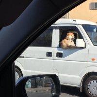 この犬めっちゃムキムキに見える