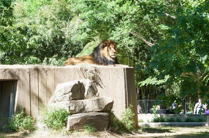 National Zoo 5.23 (16 of 34)