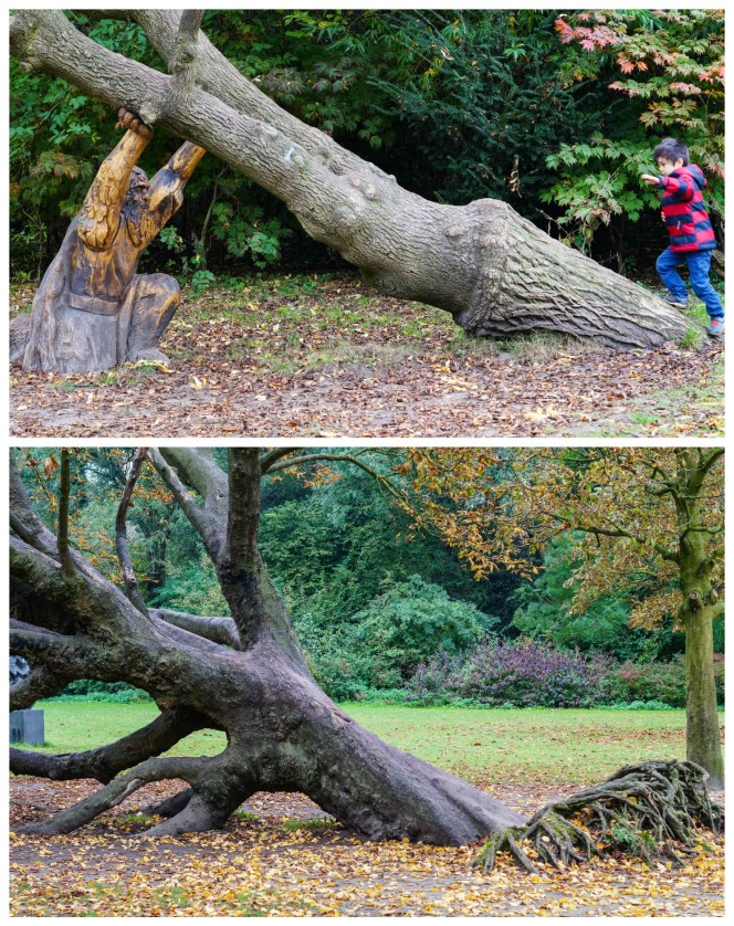 Tree leaning over with roots exposed in Vondelpark, held up with wood carving.