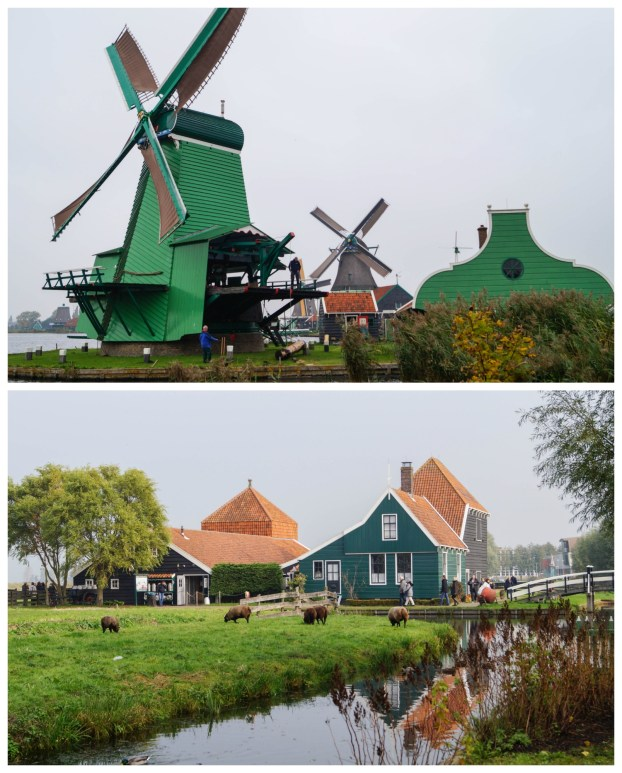 Green buildings with orange roof and green windmills at Zaanse Schans.
