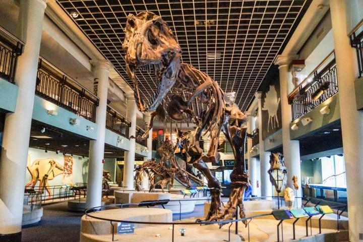 Dinosaur Hall exhibit with a Tyrannosaurus Rex fossil.