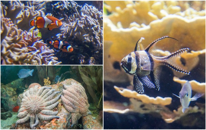 Clownfish, Sea Stars, and Cardinalfish at the National Aquarium.