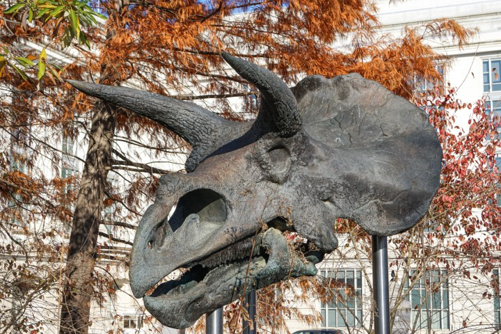 Triceratops head statue outside the Smithsonian National Museum of Natural History