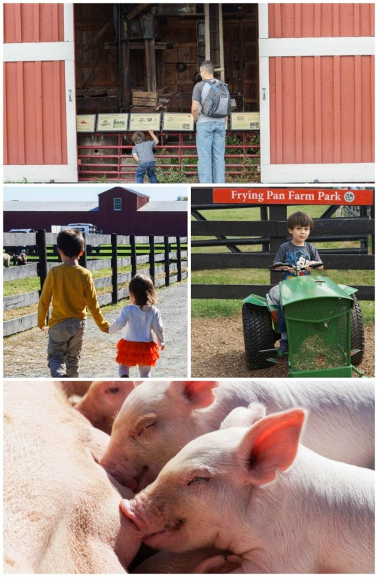 Collage of photos at Frying Pan Farm Park- barn, tractor, and baby pigs.