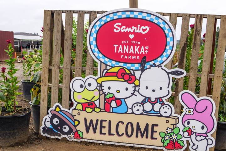 Welcome sign to Tanaka Farms with Hello Kitty and friends.
