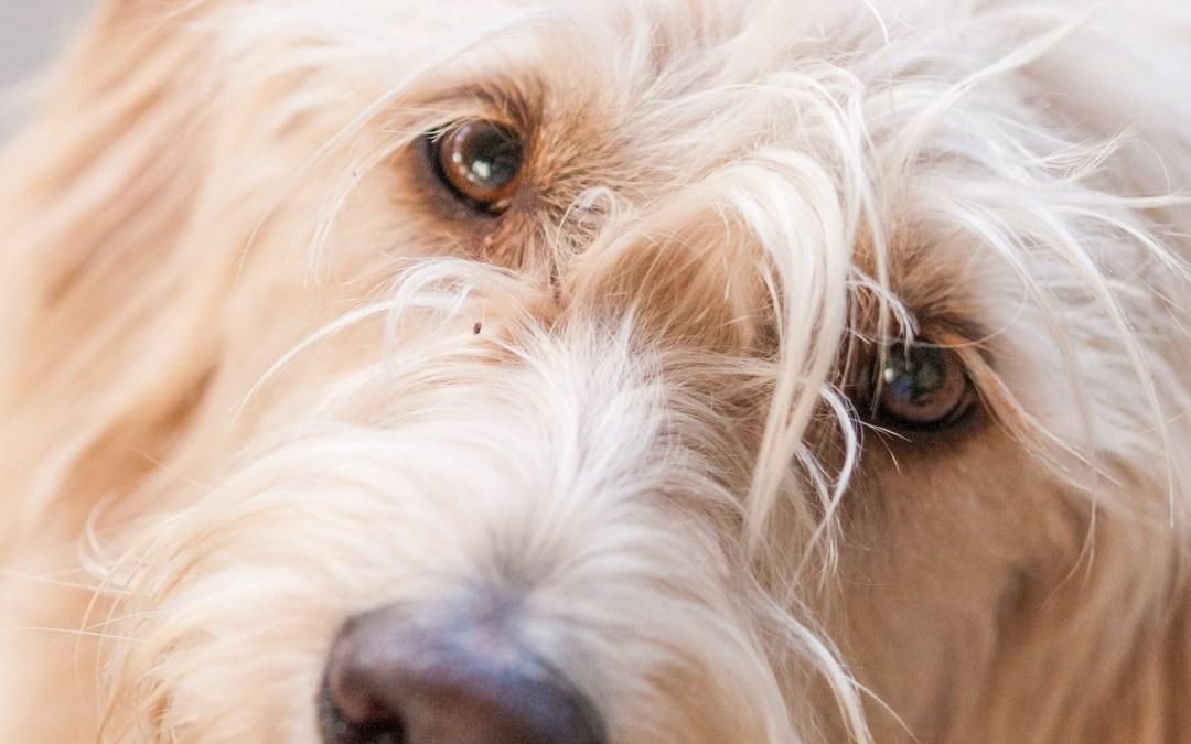 Pet Photography Tips: Woof, meow, quack. Squeak, moo, toot, weeeeeeeee, zing!