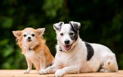 Twinkle, Lad & Lara | Waikato Pet Photography