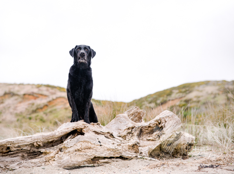 PawTraits of Jett | Wellington Pet Photography