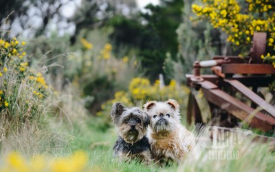 Radar & Coco   Wellington Pet Photography