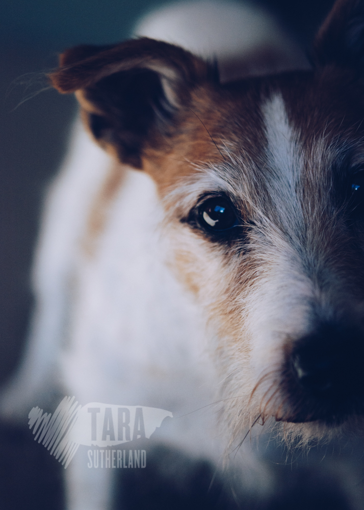 Bonnie | Auckland Pet Photography | Tara Sutherland