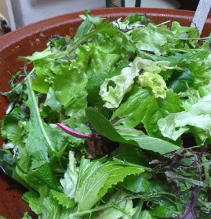Winter Salad Greens