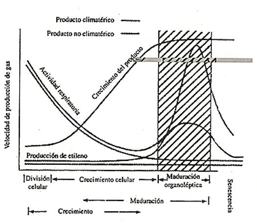 Producto climatérico