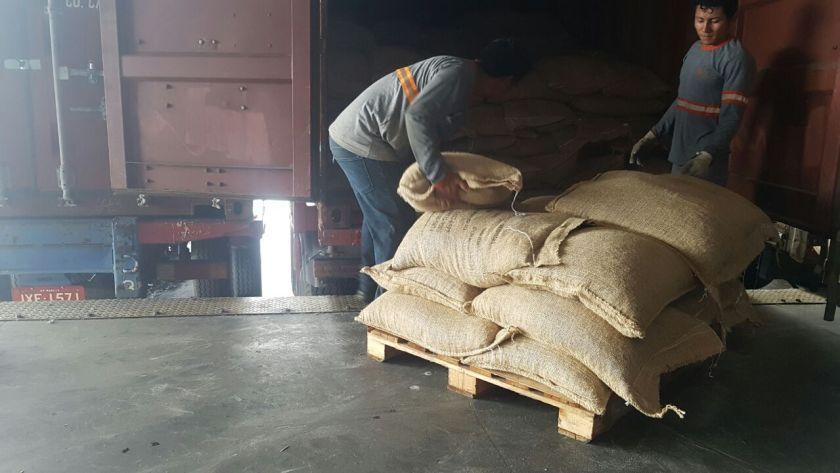 exporting tonka beans cumaru
