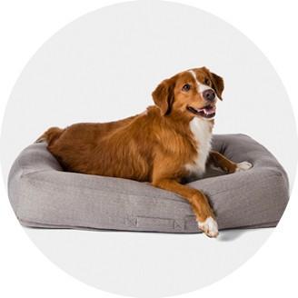 dog beds target