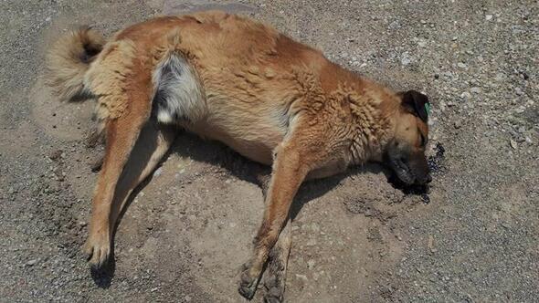 Yine Köpek Katliamı Yaptılar!