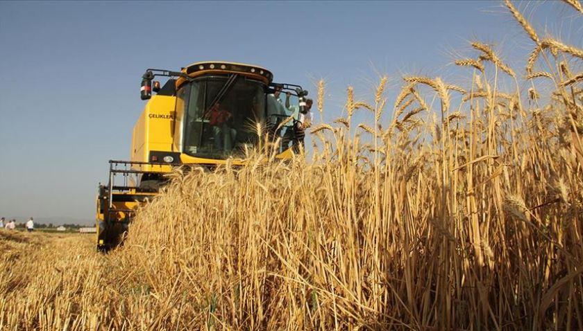 Buğdayda bu yıl 20,5 milyon ton rekolte bekleniyor