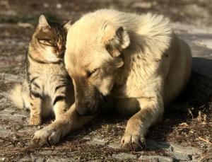 Cezalar Ağırlaşacak, Hayvanlar Sokağa Terk Edilemeyecek