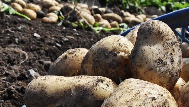 TMO Patates ve Soğan Üreticisine 25 Milyon Liralık Ödeme Yaptı