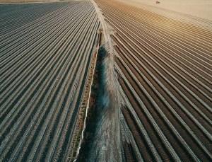 Tarım, Gıda ve İçecek Sektöründe 5,2 Milyar Dolarlık İhracat