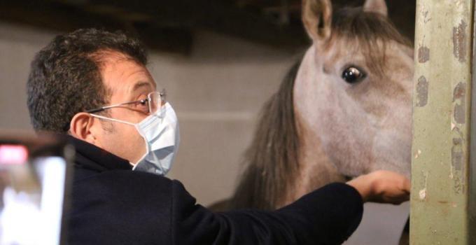 İBB 254 Atın Bakımsızlıktan öldüğünü duyurdu!