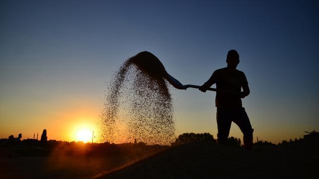 Çiftçilere 500 Bin Liralık Destek Ödemesi