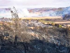 Burdur, Manavgat, Kaş ve Adana'nın Kozan İlçesinde Yangın Paniği! Kente Kül Yağdı