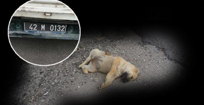 Vicdansızlık! 60 Yavru Köpeği Ölüme Terk Ettiler…24'ü Araçların Altında Ezilerek Can Verdi