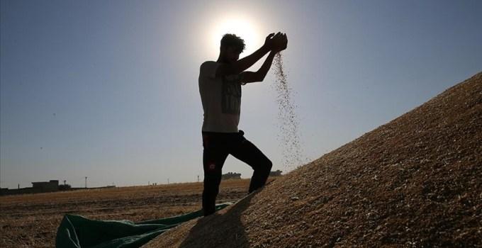 İklimsel Verim Kaybı Yaşayan Hububat ve Baklagil Üreticilerine Destek Verilecek