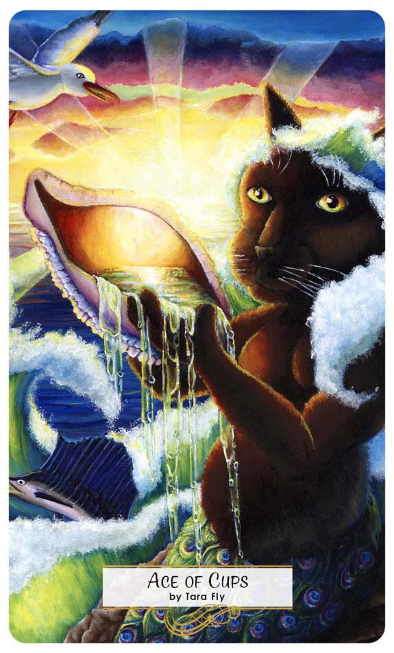 Ace Of Cups As Card Of The Day