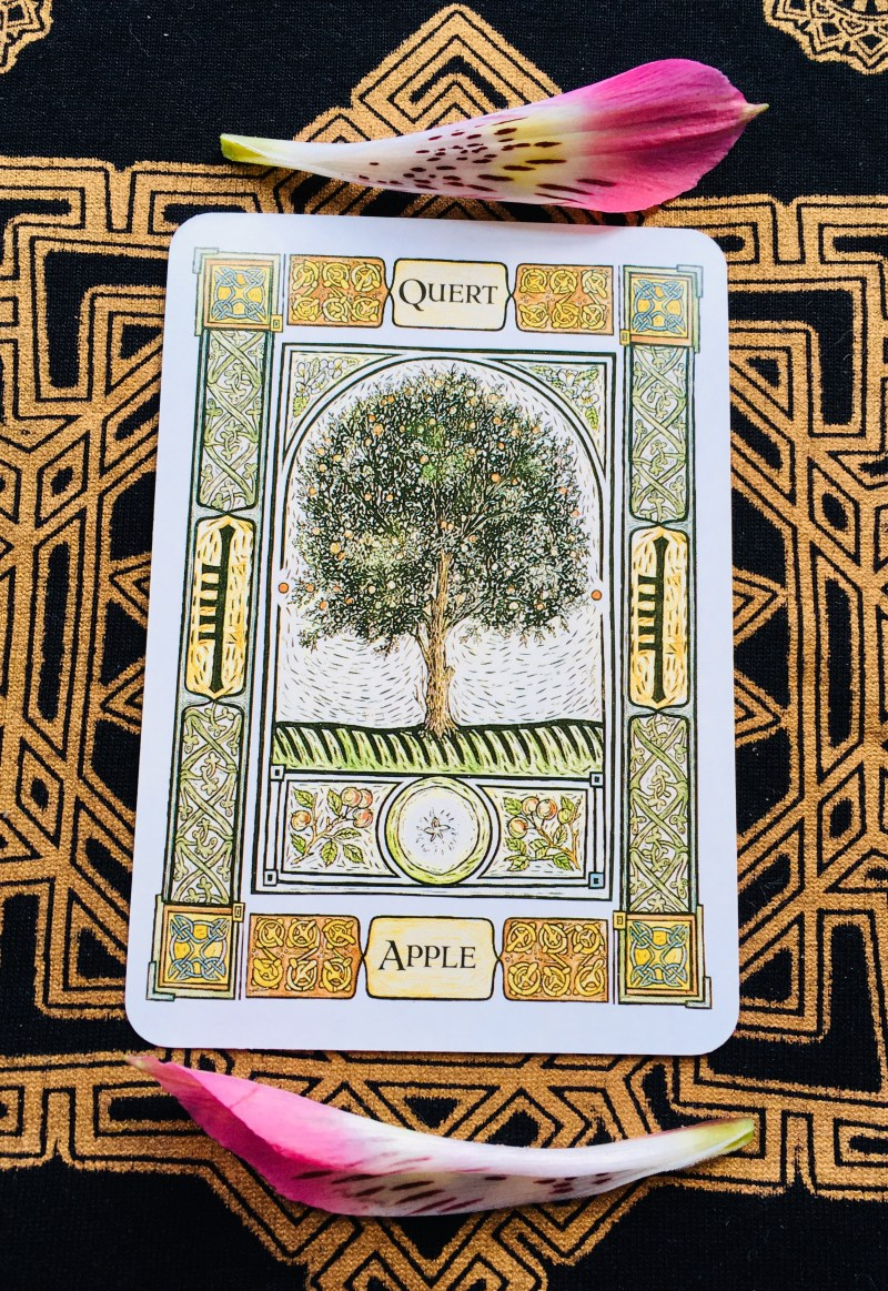 Apple Card, from the Celtic Tree Oracle