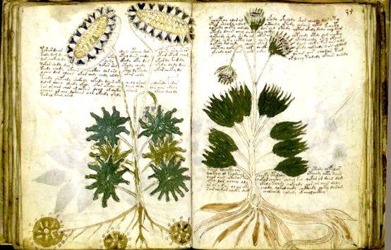 Las-plantas-y-la-magia