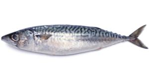 青魚の種類一覧を寫真(畫像)で!アレルギーの癥狀や原因と対処方法