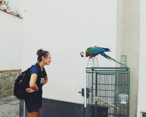 Briggs hanging out with parrot while abroad. Courtesey of Kelsey Briggs