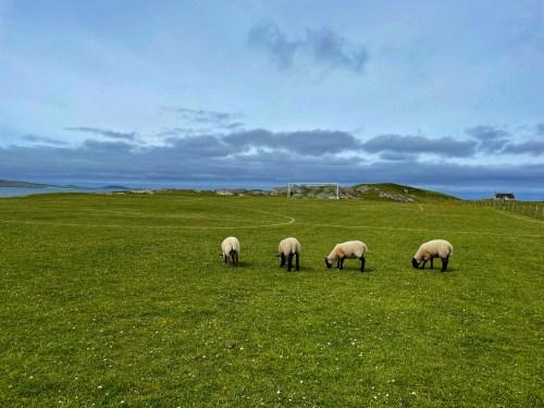 Eriskay football pitch with sheep