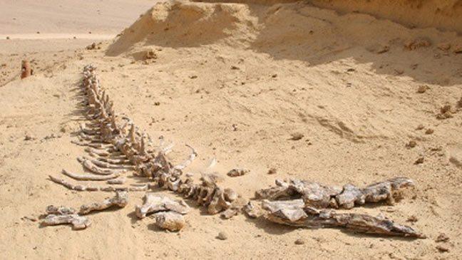 علماء المتحجرات يكتشفون في البيرو أحافير لأقدم التماسيح في العالم