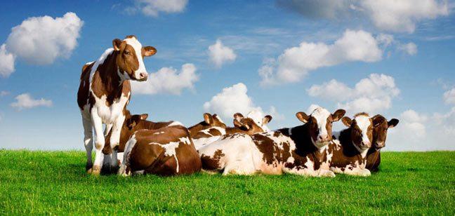 هل تلوث الزراعة البيئة